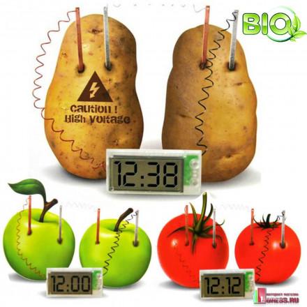 Эко часы из овощей